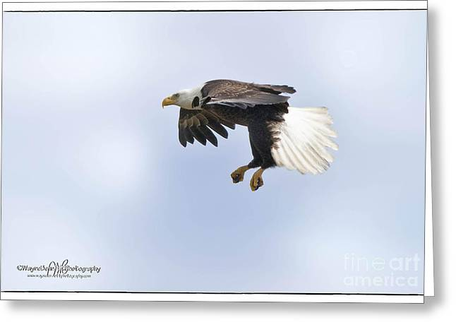 Eaglelanding Approach Greeting Card by Wayne Bennett