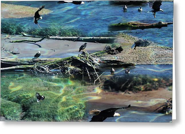 Eagles - Birds Of Prey  Greeting Card