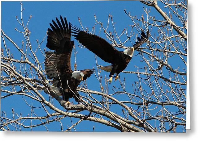 Eagles Greeting Card