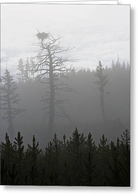 Eagle's Nest In Fog Greeting Card