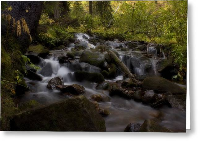 Greeting Card featuring the photograph Early Autumn Cascades by Ellen Heaverlo