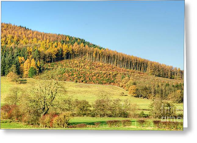 Early Autumn Greeting Card by David Birchall