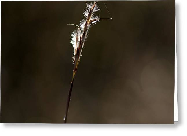 Early Autumn Greeting Card by Karen Slagle