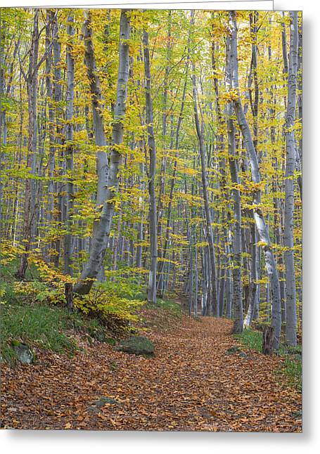 Greeting Card featuring the photograph Early Autumn Vitosha Mountain Forest Bulgaria by Jivko Nakev