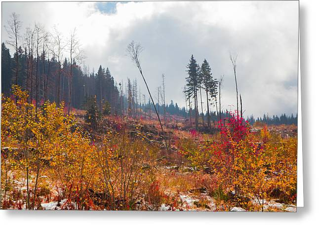 Greeting Card featuring the photograph Early Autumn Yellow Red Colored Mountain View by Jivko Nakev