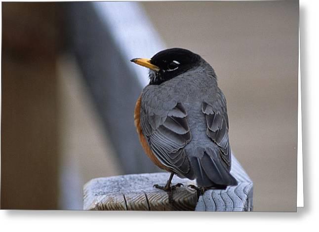 Early Bird Greeting Card by Sharon Elliott