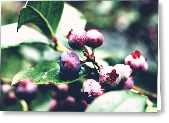Early Blueberries Greeting Card