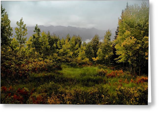 Greeting Card featuring the photograph Early Fall On Kebler Pass by Ellen Heaverlo