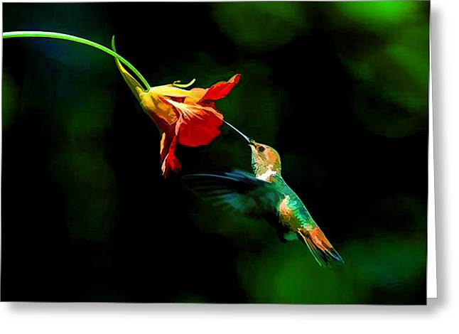 Early Hummingbird Greeting Card