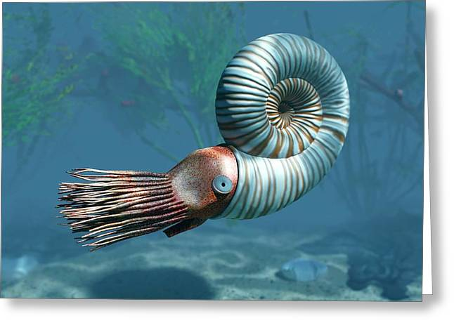 Early Jurassic Ammonite Greeting Card by Walter Myers