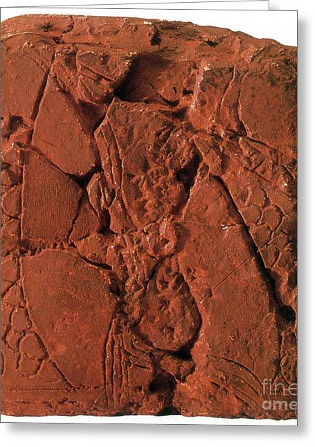 Early Map, Babylonian Clay Tablet, 6200 Greeting Card by Science Source