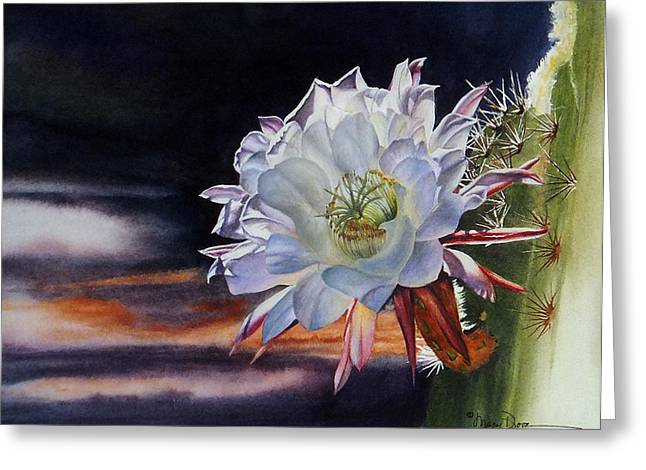 Early Morning Argentine Giant Cactus Flower Greeting Card