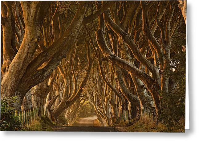 Early Morning Dark Hedges Greeting Card by Derek Smyth