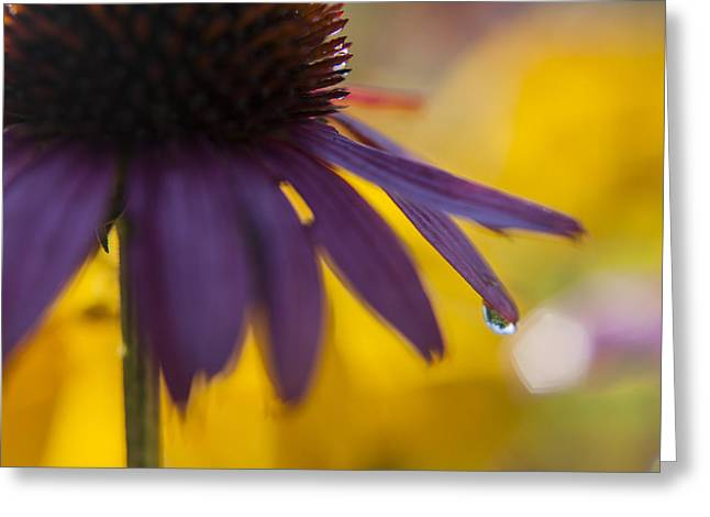 Early Morning Dew Drops Greeting Card