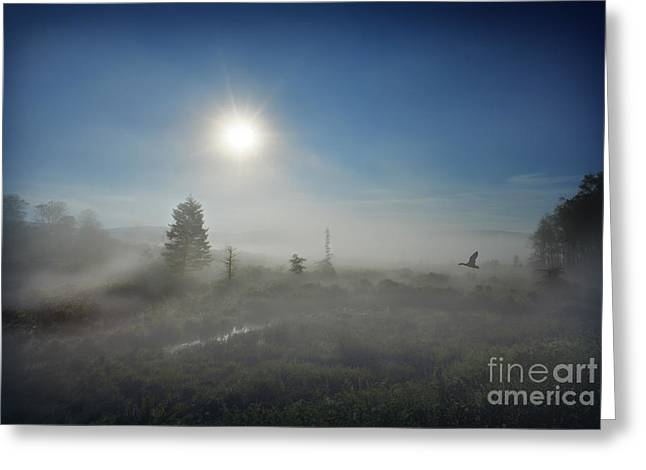 Early Morning Fog At Canaan Valley Greeting Card by Dan Friend