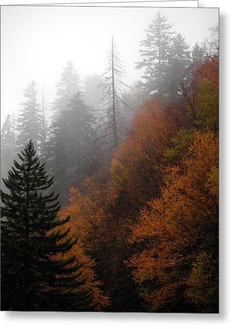 Early Morning Fog Smoky Mountains Greeting Card by John Saunders