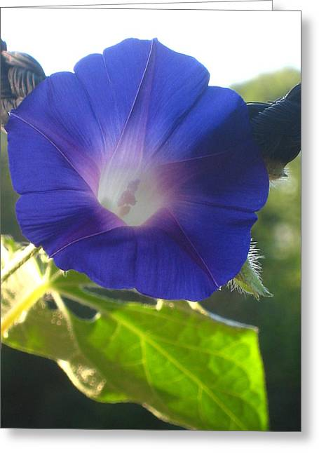 Early Morning Glory Greeting Card by Jennifer E Doll