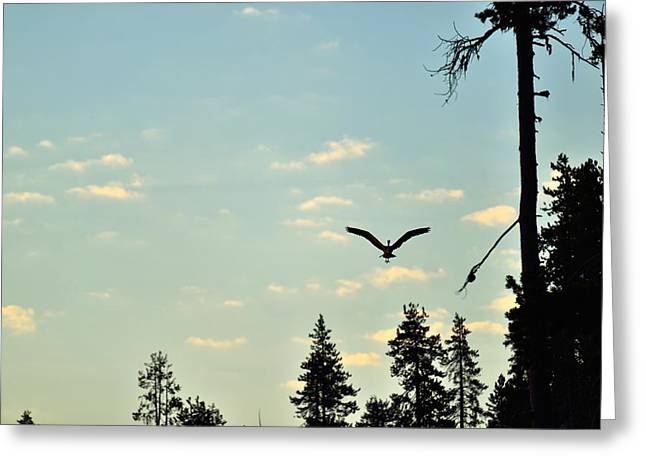 Early Morning Heron In Silhouette Greeting Card by Rich Rauenzahn