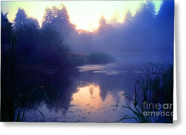Early Morning Mist Bullfrog Pond Greeting Card