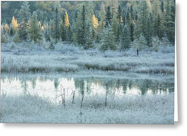 Early Morning Over Costello Creek Greeting Card