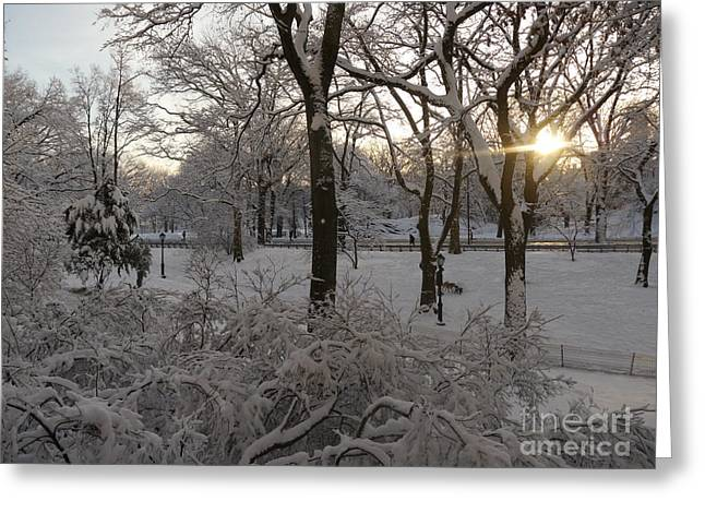 Greeting Card featuring the photograph Early Morning Sun In Central Park.  by Winifred Butler