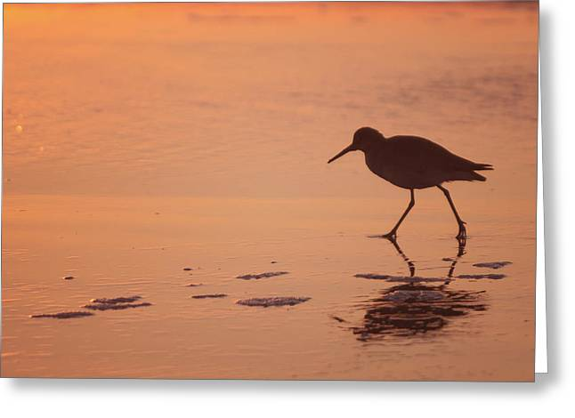 Greeting Card featuring the photograph Early Morning Walk by Sharon Jones