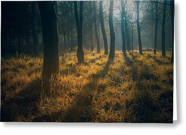 Early Morning Woodland Walk Greeting Card