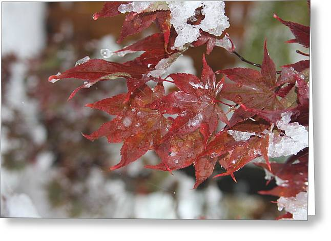 Greeting Card featuring the photograph Early Snow by Vadim Levin