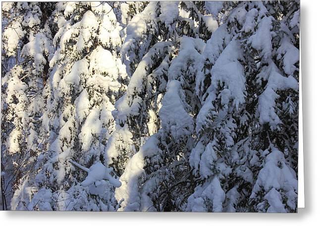 Early Snowfall Greeting Card by Jim Sauchyn
