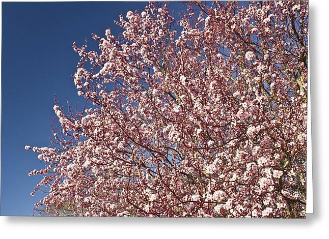 Early Spring Greeting Card by Larry Darnell