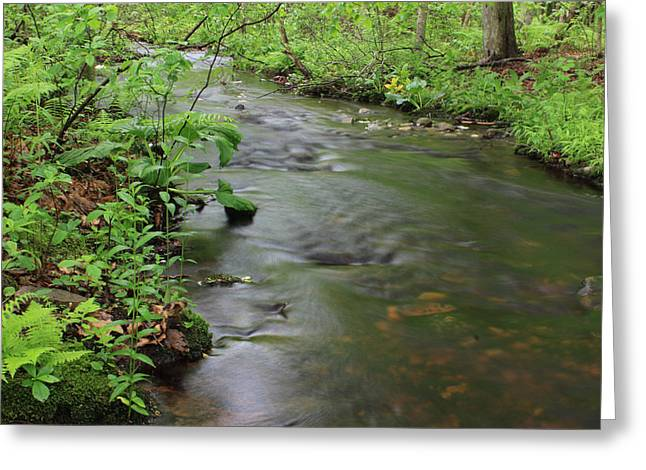 Early Summer At Borden Brook Greeting Card by Andrew Pacheco