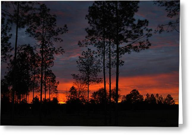 Early Sunrise Greeting Card by Donald Williams