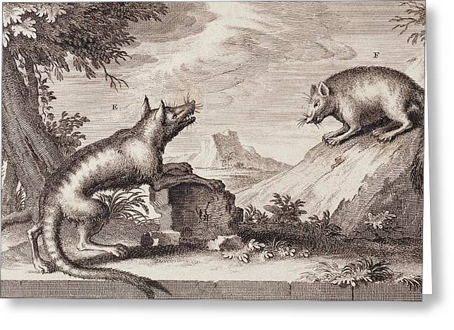 Early Tasmanian Wildlife Greeting Card