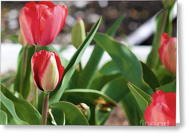 Early Tulips Greeting Card