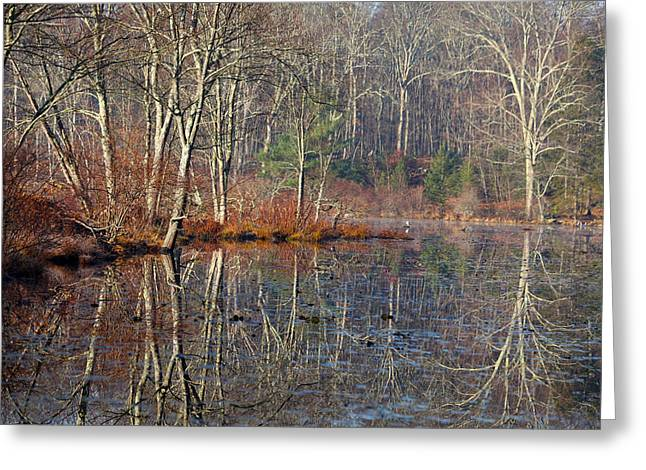 Early Winter Reflects Greeting Card by Karol Livote