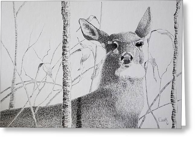 Early Winters Whitetail Greeting Card