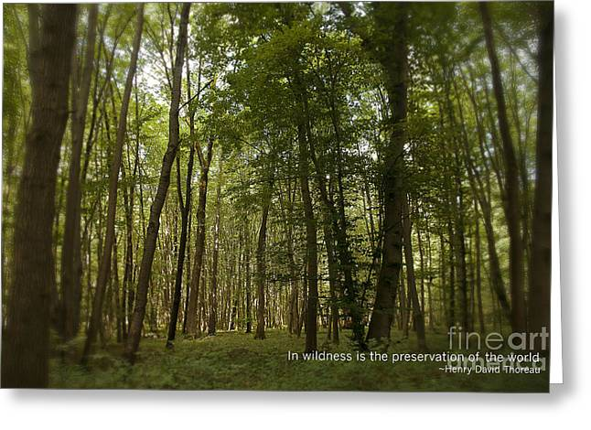 Earth Day Special - In Wildness Greeting Card