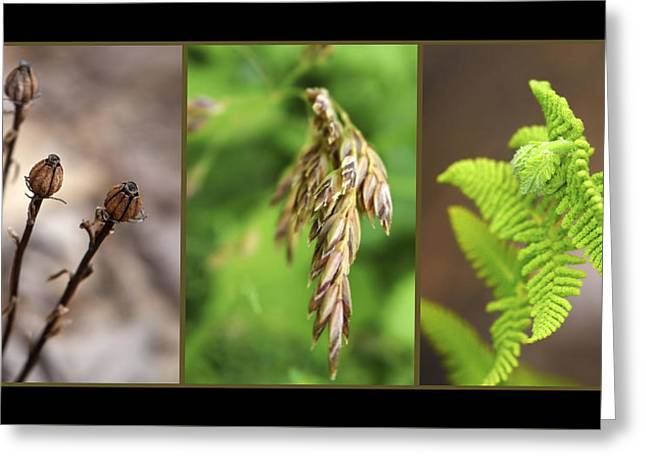 Earth Triptych Greeting Card by Christina Rollo
