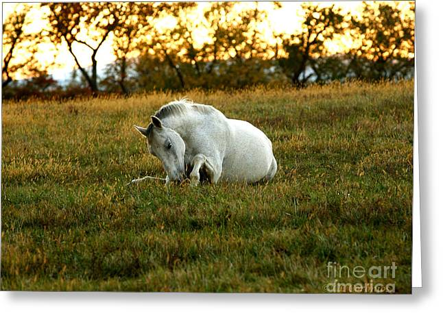 Greeting Card featuring the photograph Easier Lying Down by Carol Lynn Coronios