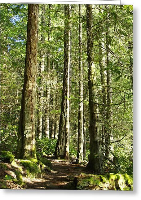 East Sooke Park Trail Greeting Card