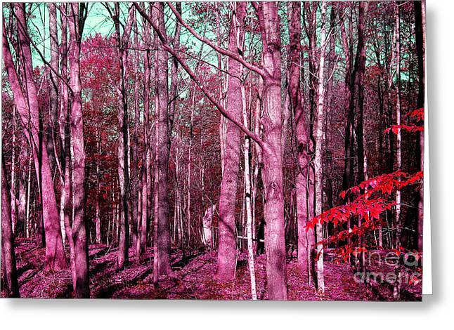 East Trail  Greeting Card by Tina M Wenger