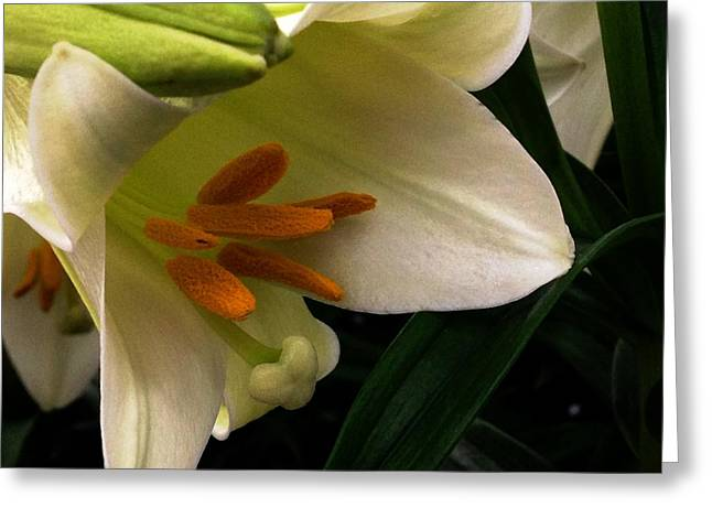 Easter 2014-4 Greeting Card by Jeff Iverson
