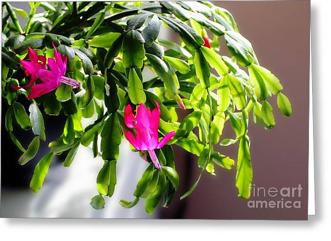 Easter Cactus In The Sun Greeting Card by Barbara Griffin