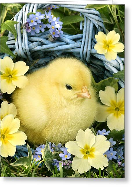 Easter Chick In Basket Greeting Card by Greg Cuddiford