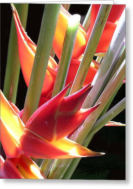 Easter Heliconia Greeting Card by James Temple