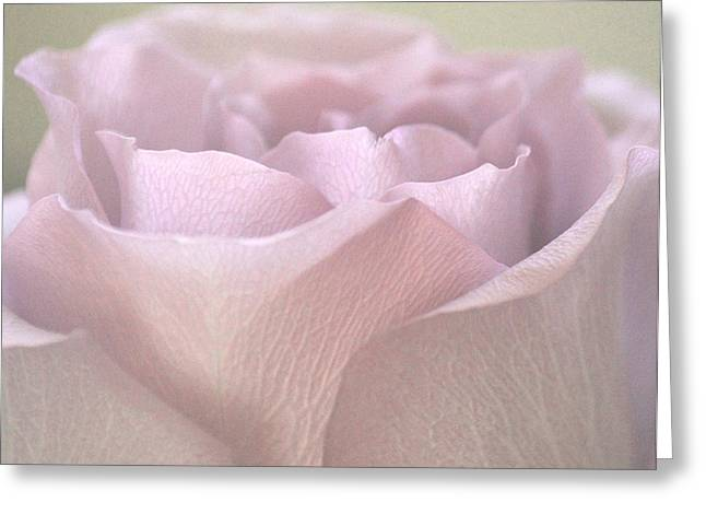 Easter Lilac Rose Greeting Card by The Art Of Marilyn Ridoutt-Greene