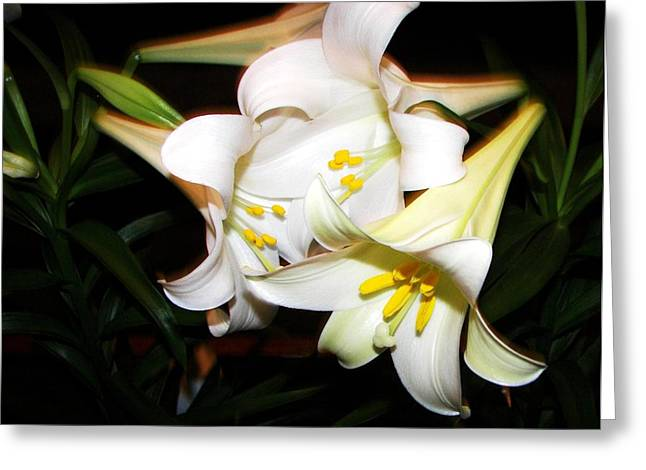 Easter Lilies Greeting Card