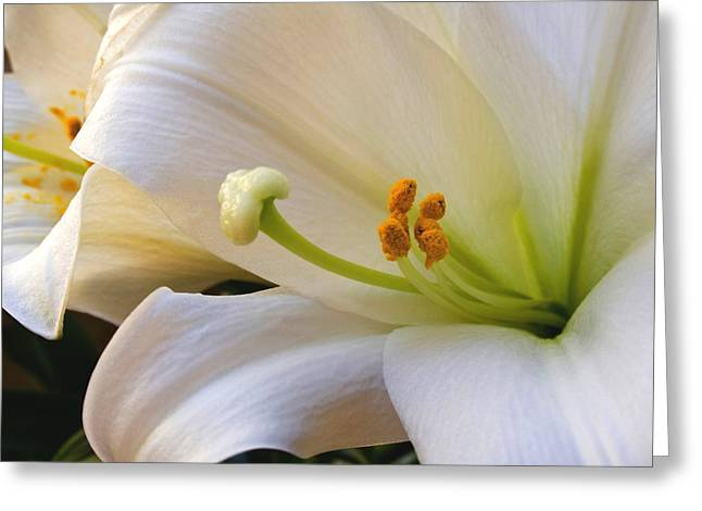 Greeting Card featuring the photograph Easter Lily by Bonnie Willis
