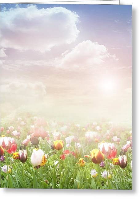 Easter Spring  Background Greeting Card by Mythja  Photography