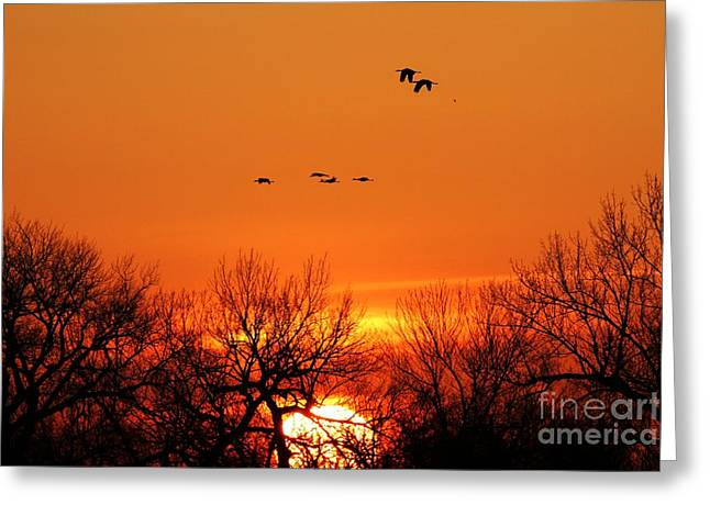 Easter Sunrise Greeting Card by Elizabeth Winter